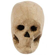 Kranium i Papier-maché - H: 10 cm