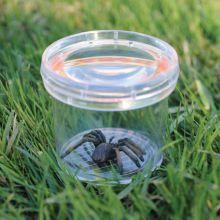 Insektsglas - Lupp i locket