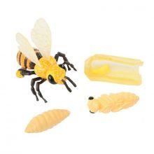 Livscykel: Från ägg till insekt - Honungsbi