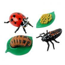 Livscykel: Från ägg till insekt - Nyckelpiga