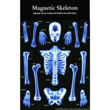 Magnetiskt Skelett
