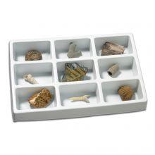Min fossil-samling