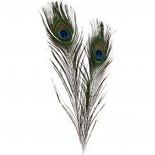 Påfågelfjädrar, 10 st.