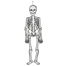 Självlysande skelett i kartong, 120 cm