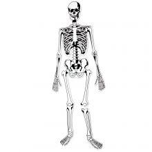 Golvpussel - Skelett