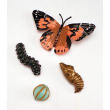 Livscykel: Från ägg till insekt - Fjäril