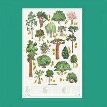 Poster 50 X 70 cm. - 18 viktiga träsorter