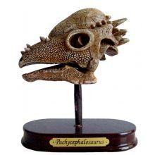 Utgrävningsset - Pachycephalosaurus