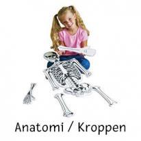 Anatomi/Kroppen